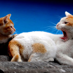 Mummy Chocolate please by Subrata Sarkar - Animals - Cats Playing ( animals, cat, pet )
