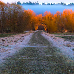 The Road by Rakesh Malik - Landscapes Forests ( peaceful, dawn, serenity, serene, dramatic, magic hour, nisqually, vibrant, sunrise, landscape, destination )