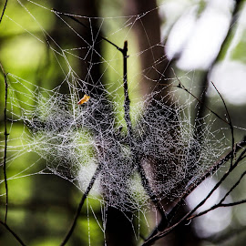 by Drago Gatolin - Nature Up Close Webs