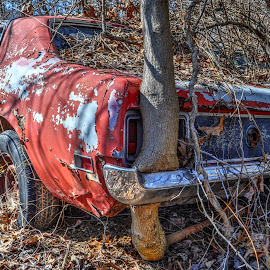 Nature Knows No Bounds by Mike Roth - Transportation Automobiles (  )