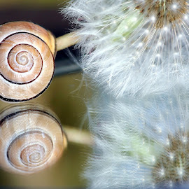 by Iveta Franzová - Nature Up Close Other Natural Objects