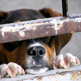 Stip by Zeljko Secujski - Animals - Dogs Portraits