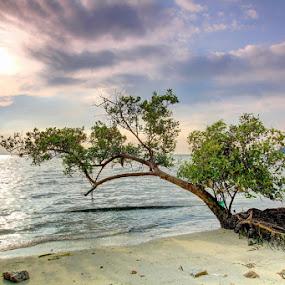 The Survivor by Danny Tan - Landscapes Beaches