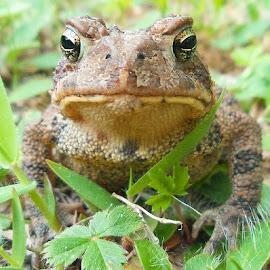 by Rachel Brode - Animals Amphibians ( amphibian, allwhatsbeautiful, allnatureshots, animazing_nature, bestnatureshots, fiftyshades_of_nature, ig_naturesbest, instanaturefriends_, jj_justnature, natura_love, naturehippys, nuc_member, splendid_animals, splendid_earth, thewhisperers, sweet_nature, tgif_feature, natureoftoday, bugs_are_us, bestnatureshot_buginsects, bestnatureshots, ig_naturesbest, insect_perfection, bestestaward, animalelite, earthboundshots )