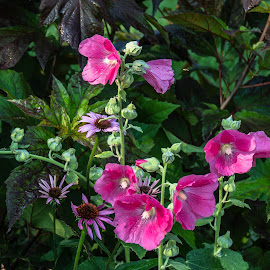 Lovely Together by Joan Sharp - Flowers Flower Gardens ( flowers, pink, purple, greens, garden )