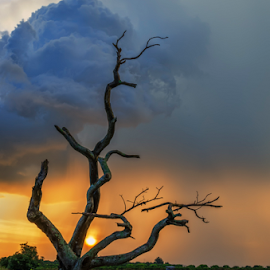 Rainint NOT Here by KIN WAH WONG - Landscapes Sunsets & Sunrises ( clouds, sunsets, old tree, no rain, scenery, landscape, dead tree, rain )