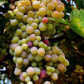 Grape by Muhammad Amin Zia - Nature Up Close Gardens & Produce