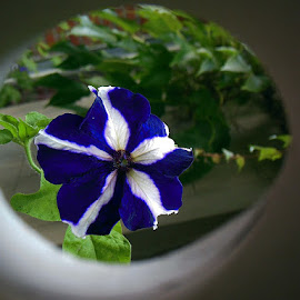 Flower by Paul Wante - Digital Art Things ( blue, green, white, digital, flower )