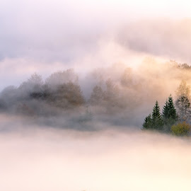Foggy morning by Marius Turc - Landscapes Forests ( fog, trees, forest, morning, mist )