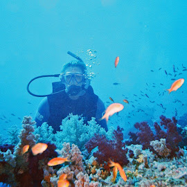 Red Sea ~ Egypt by Ingrid Anderson-Riley - Sports & Fitness Watersports