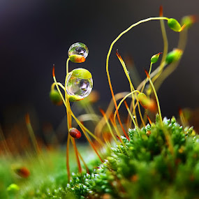 The sounds of silence by Diens Silver - Nature Up Close Flowers - 2011-2013 ( macro, nature, waterdrop, dew, plants )
