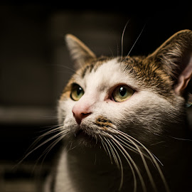 by Robert Hanna - Animals - Cats Portraits ( cat, meow, wiskers, pet, portrait )