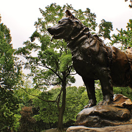 Balto by Amy Sauer - Buildings & Architecture Statues & Monuments