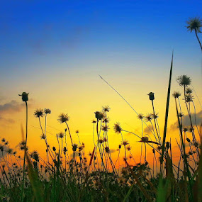 Dandelion Sunset by Alit  Apriyana - Instagram & Mobile Android