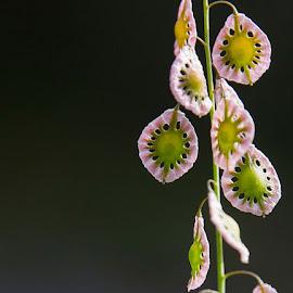 Deeli-Bobbers by Richard Duerksen - Nature Up Close Leaves & Grasses ( grasses, covered bridge, south yuba river, seeds, grass seeds, bridgeport )