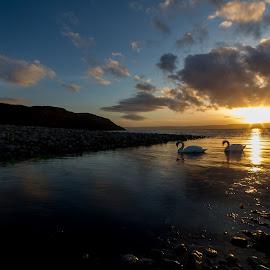 Swan Lake by Paul Masterton - Landscapes Sunsets & Sunrises ( clouds, scotland, hills, swans, sunset, reflections, isle of arran, sun )