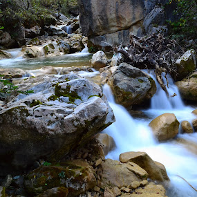 River by Ahmet Çamaltı - Nature Up Close Water ( water, nature, rock, forest, river )