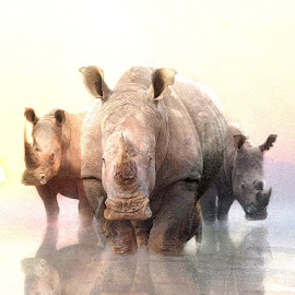 The Troika by Bjørn Borge-Lunde - Digital Art Animals ( wild animal, wilderness, animals, nature, wildlife, africa, rhino )