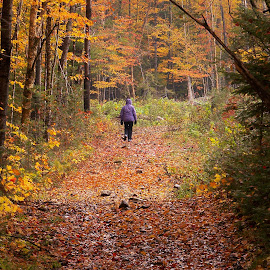 Going Back  by Gilman Michaud - Landscapes Forests