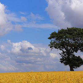 All by my self by Kim Moeller Kjaer - Landscapes Prairies, Meadows & Fields