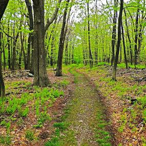App. Trail by Sabastian L - Landscapes Forests