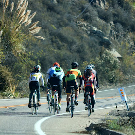 Bicycle weekend club by LaDonna McCray - Sports & Fitness Cycling ( uphill, sweating, fitness, club, exercise, group, bicycle )