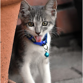 by Gordana Goga - Animals - Cats Kittens (  )