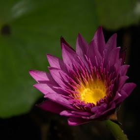 Good Morning by Camruin Kilsek - Nature Up Close Flowers - 2011-2013