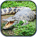 Life of Crocodile - Wild Sim APK for Bluestacks