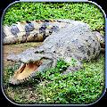 Game Life of Crocodile - Wild Sim APK for Windows Phone