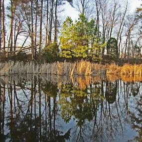 Reflection Pond by Daryl Peck - Novices Only Landscapes ( reflection, novice, outdoor, lake, pond )