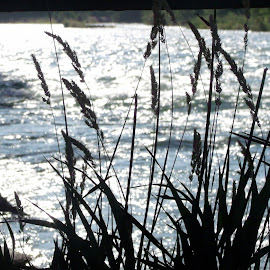 RIVER WEEDS by Cynthia Dodd - Novices Only Flowers & Plants ( currants, swiftshots, weeds, shade, river )