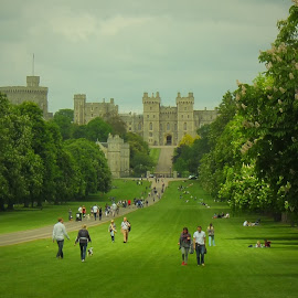 Windsor Castle from the Long Walk, Windsor Great Park by Steve Cooke - City,  Street & Park  City Parks