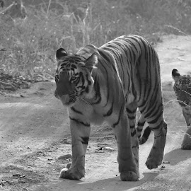 by Soham Chakraborty - Black & White Animals (  )