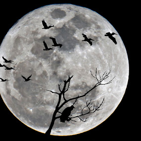 by Ken  Frischkorn - Digital Art Things ( flight, moon, black and white, buzzard )