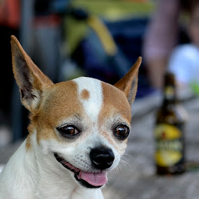 I'm happy... So what... Beer or two :) by Daniel Mlakar - Animals - Dogs Portraits