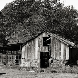Outbuilding in Distress by Rob Heber - Buildings & Architecture Decaying & Abandoned ( damaged, countryside, old, wood, shack, metal fence, remote, leaves, rustic, weathered, stained, pasture, barn, branches, ranch, grass, old building, rural, wooden planks, fence, hay barn, neglected, outdoors, trees, rural scene, brush, day, weeds, hay loft, decay, metal poles, natural light, sepia, coral, monochrome, black and white, oklahoma, sepia toned, landscape, farm, outbuilding, secluded, no people, old fashioned, tin roof, country life, stone wall, scenic, limbs, livestock, boards, field, shed, rotting )