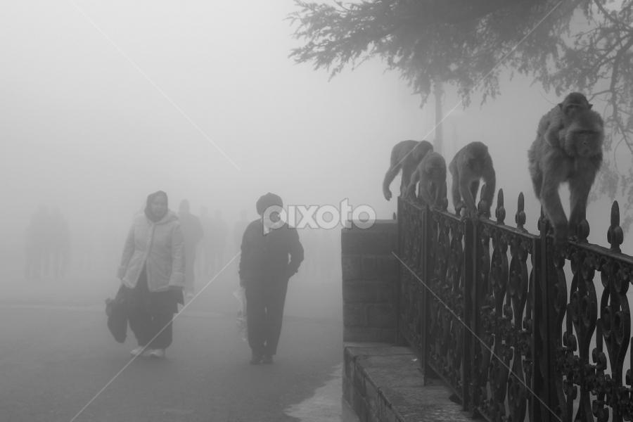 Directions of evolution by Liudmila Lebedz - People Street & Candids ( monkey, street, people, walk, fog )