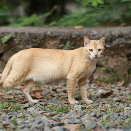 Meow by Oliver Co - Novices Only Pets ( wild animal, cats, wild, cat, wild life, manila, stones, philippines, animal )