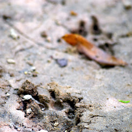 A Lasting Impression by Susan Myers - Animals Other ( nature photography, animal prints, tracks, dirt )