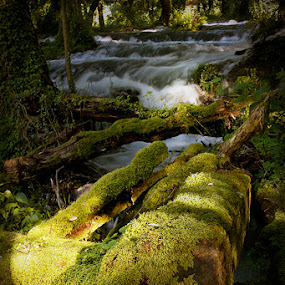 Moss by Zoran Mrđanov - Landscapes Waterscapes ( waterscape, waterfall, moss, river,  )