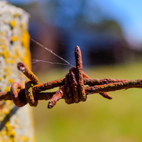 Barbed wire and fencepost by Gwyn Goodrow - Artistic Objects Other Objects ( farm, ranch, fence, pasture, post, wire, sunny, land, barbed, day,  )
