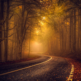 Welcome into my dream by Dobre Cezar - Landscapes Forests ( mystery, colorful, fall, forest, mist )