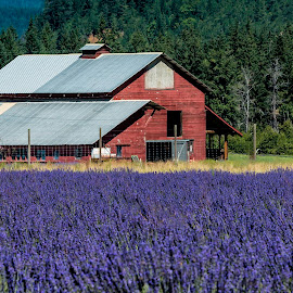 Red barn by Chris Bartell - Buildings & Architecture Other Exteriors ( lanender, hood river, landscape )