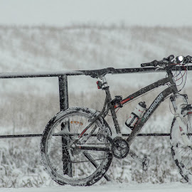Bicycle on the bridge with much snow by Poiana Cipolin - Transportation Bicycles ( bicyle, snow, bridge )