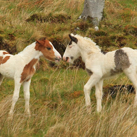 New borns  by Chris Mcgurgan - Novices Only Wildlife