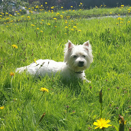 Daisy's  first summer  by Pauline O' Grady - Animals - Dogs Portraits