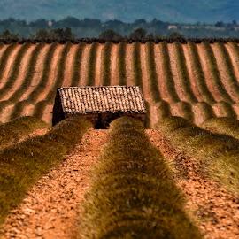 Lavenda Fields by Stanley P. - Landscapes Prairies, Meadows & Fields