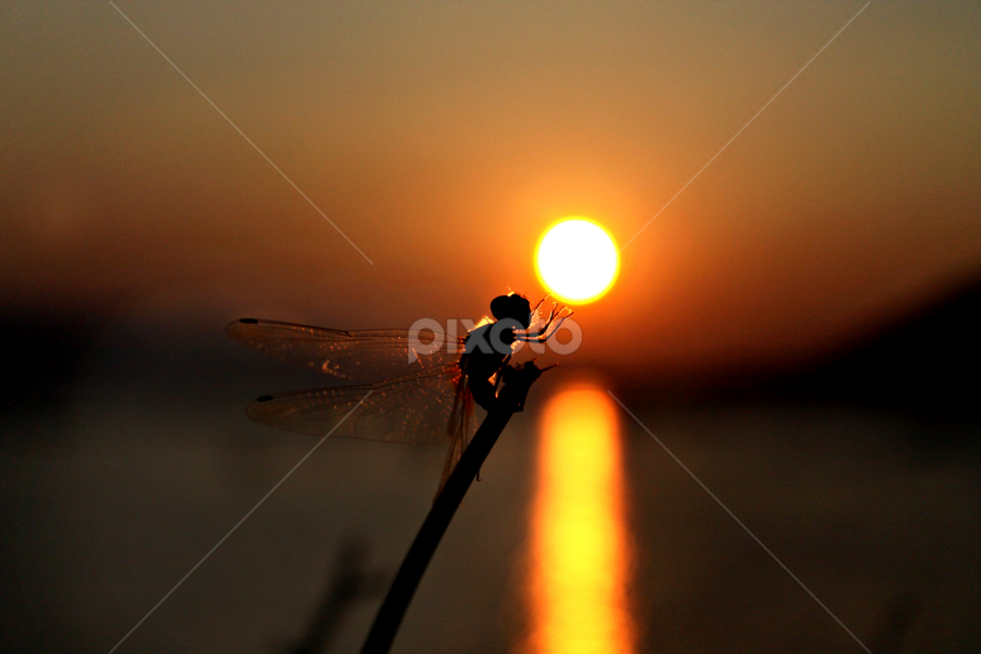 Wish by Dipankar Borah - Abstract Macro ( water, stick, dragon fly, sun )