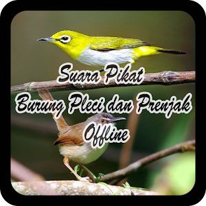 Download Suara Pikat Burung Pleci dan Prenjak Offline for PC